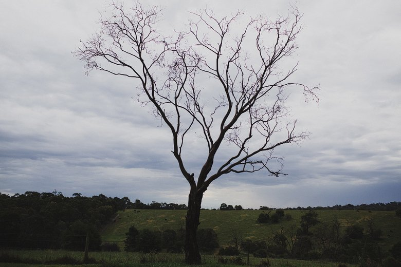stormy tree shot, the Briars